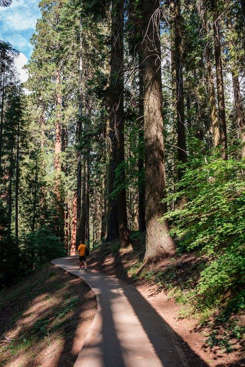 Fotos de stock gratuitas de actividad, al aire libre, árbol