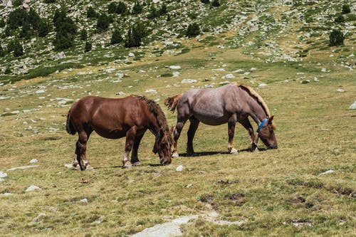 Horses grazing in pasture near mountains in countryside