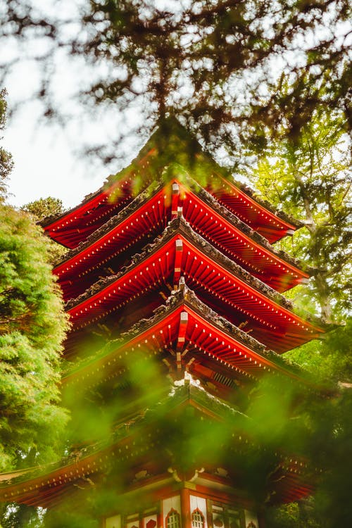 From below of traditional Asian red pagoda located in green Japanese Tea Garden with lush trees on sunny day in San Francisco