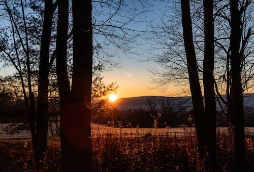 ゴールデンアワー, 日の出, 秋の無料の写真素材
