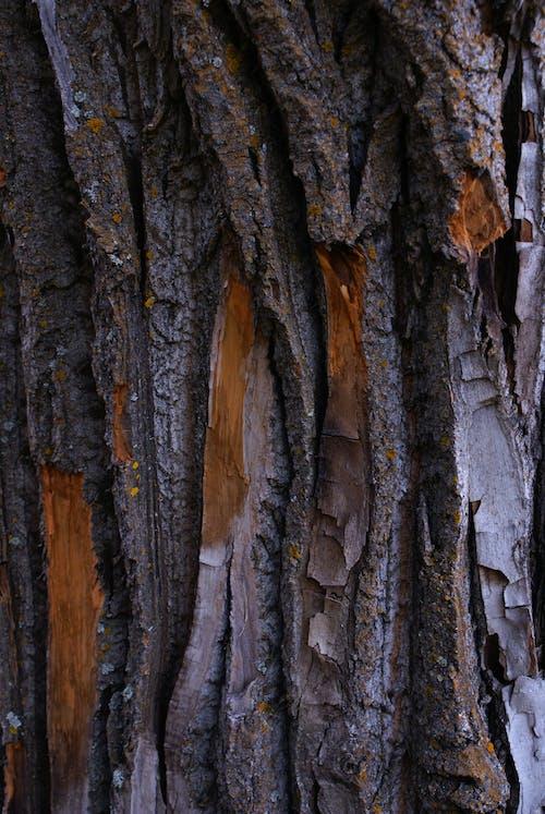 Ingyenes stockfotó fa, fakéreg, kéreg témában