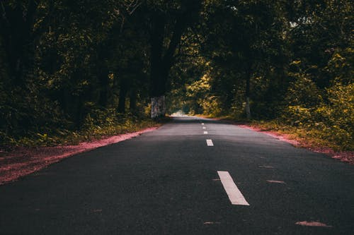 Asphalt road surrounded by lush forest