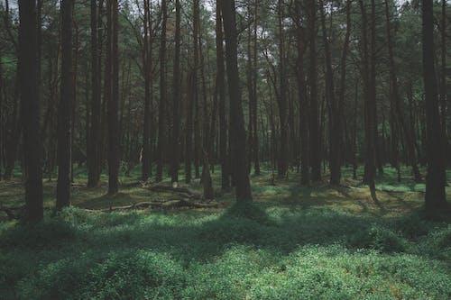 Green Bushes Beneath Tall Trees