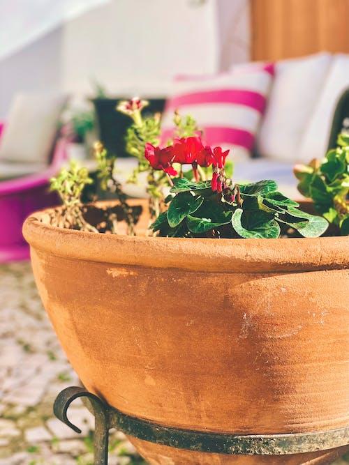 Kostnadsfri bild av klar sol, trädgård, vackra blommor