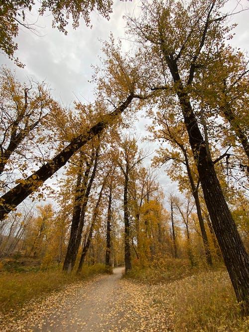 Foto profissional grátis de aconselhamento, árvores, calçada