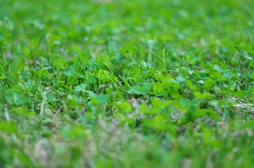 Darmowe zdjęcie z galerii z roślina, roślina ogrodowa, trawa