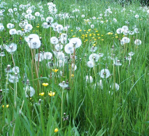 Free stock photo of meadow