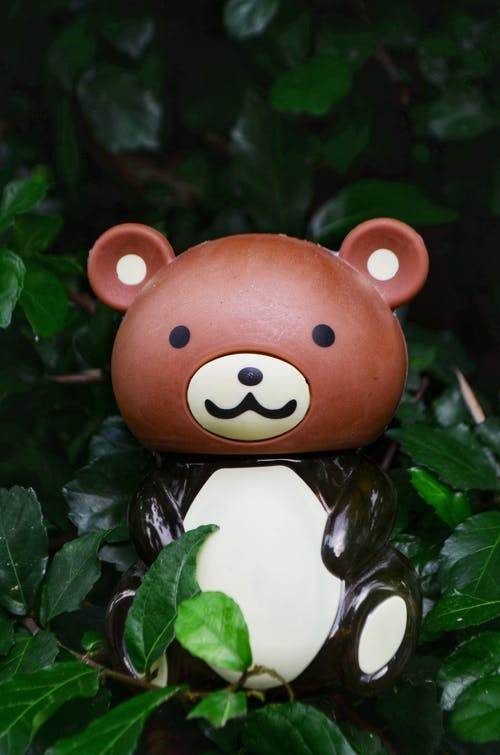 Free stock photo of animal portrait, bear, bush, HD wallpaper
