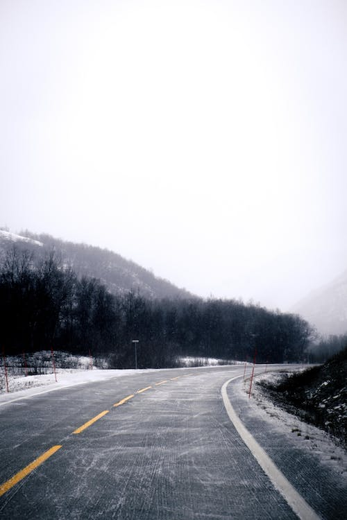Gray Concrete Road Between Trees during Foggy Day