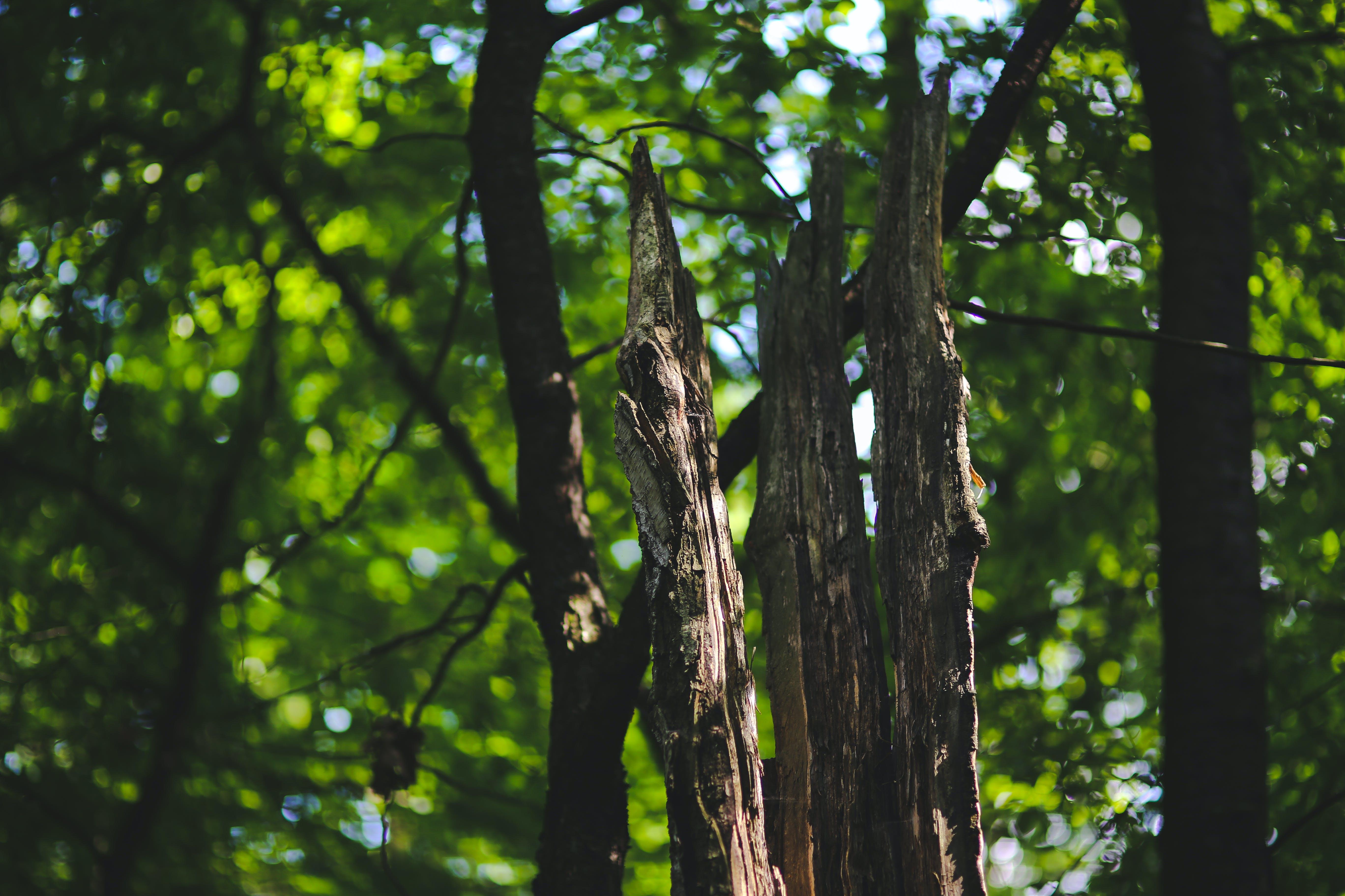 Foto d'estoc gratuïta de arbre, bagul, bosc, boscos