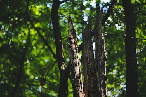 Ilmainen kuvapankkikuva tunnisteilla haukkuminen, kasvikunta, kasvu, kesä