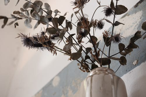 From below of different dried plants with thin stalks and small leaves in vase at home