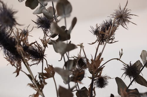 Dried plant sprigs with thin stems and rounded wavy leaves in house on white background