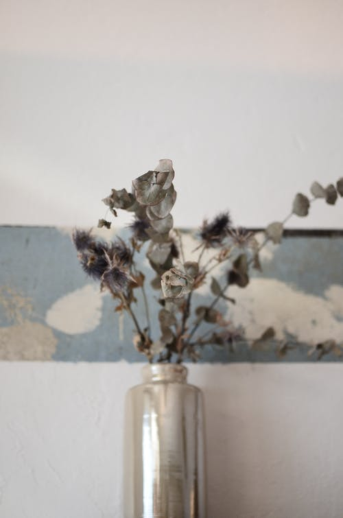 Dry plant sprigs in vase near wall at home
