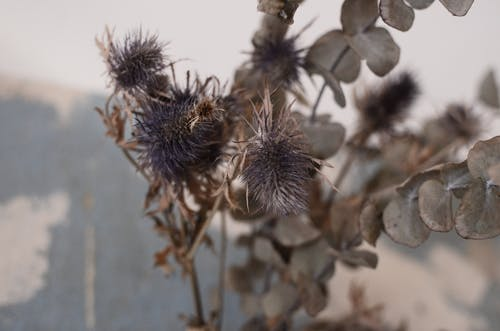 Assorted dry barbed plant sprigs with thin stalks and small leaves near wall in daytime