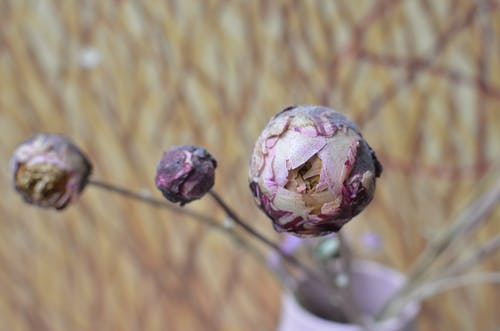 From above of dried flowers with round shaped buds on thin stems on blurred background