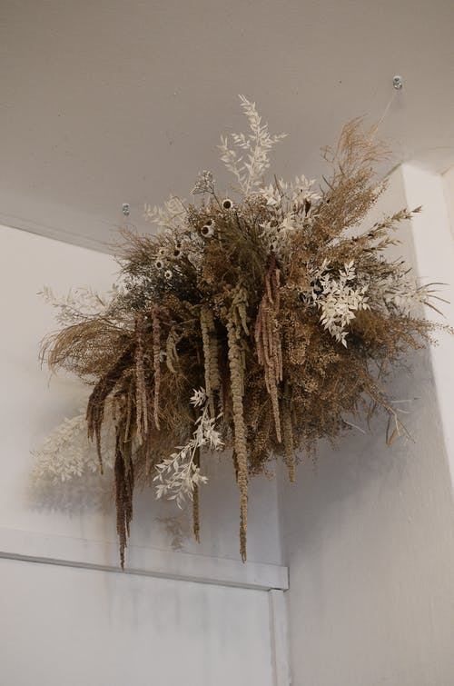 From below of assorted dry plants and flowers hanging on white wall at home