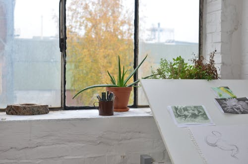 Potted plants on windowsill in art workshop