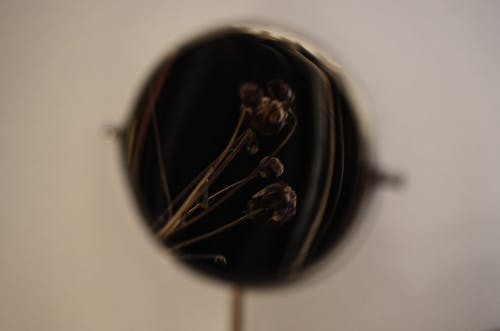 Thin dried twigs and buds of plant reflecting in mirror against gray background