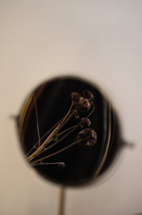 Reflection of fragile dried plant with sprigs and buds decorating house on gray background