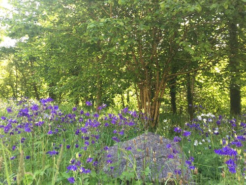 Free stock photo of bluebells, flowers, nature