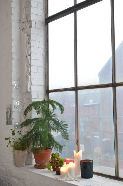 Interior of apartment with white brick wall and potted plants placed near candles with burning fire in residential house