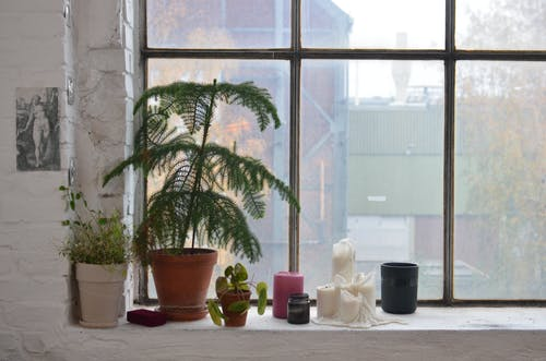 Potted plants with candles on windowsill