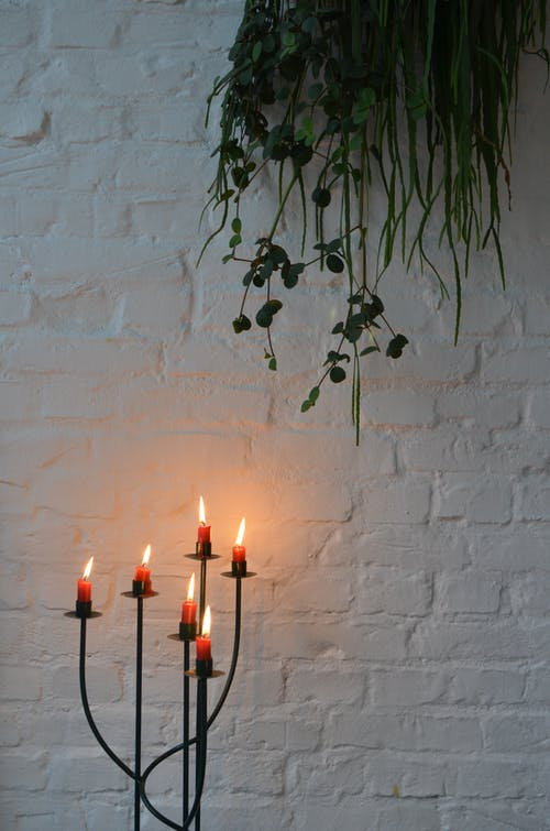 Burning candles with glowing flame placed against white painted brick wall under green plant