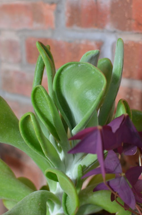 Fotos de stock gratuitas de alojamiento, apartamento, botánica