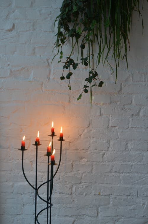 Burning candles in candlestick under green plant