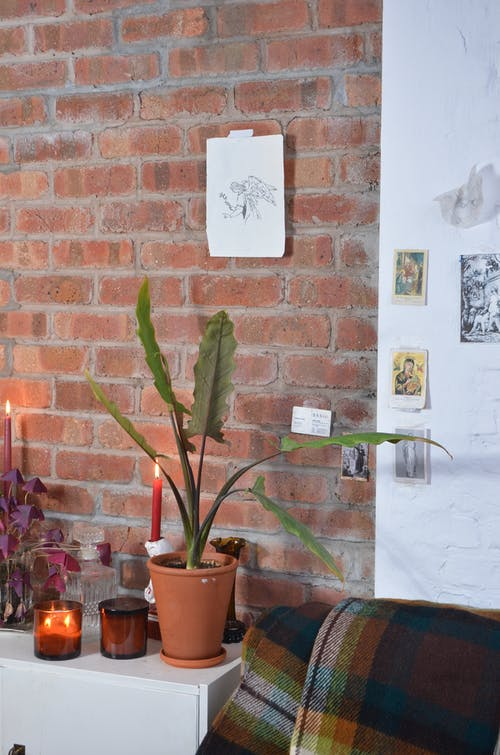 Interior of cozy room with green plant in pot placed on white cabinet near glowing candles against brick wall in flat
