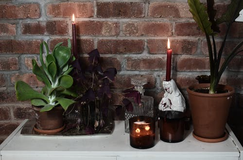 Burning candles near potted plants on table in house
