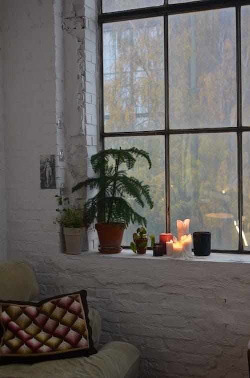 Cozy room interior with sofa and plants on windowsill
