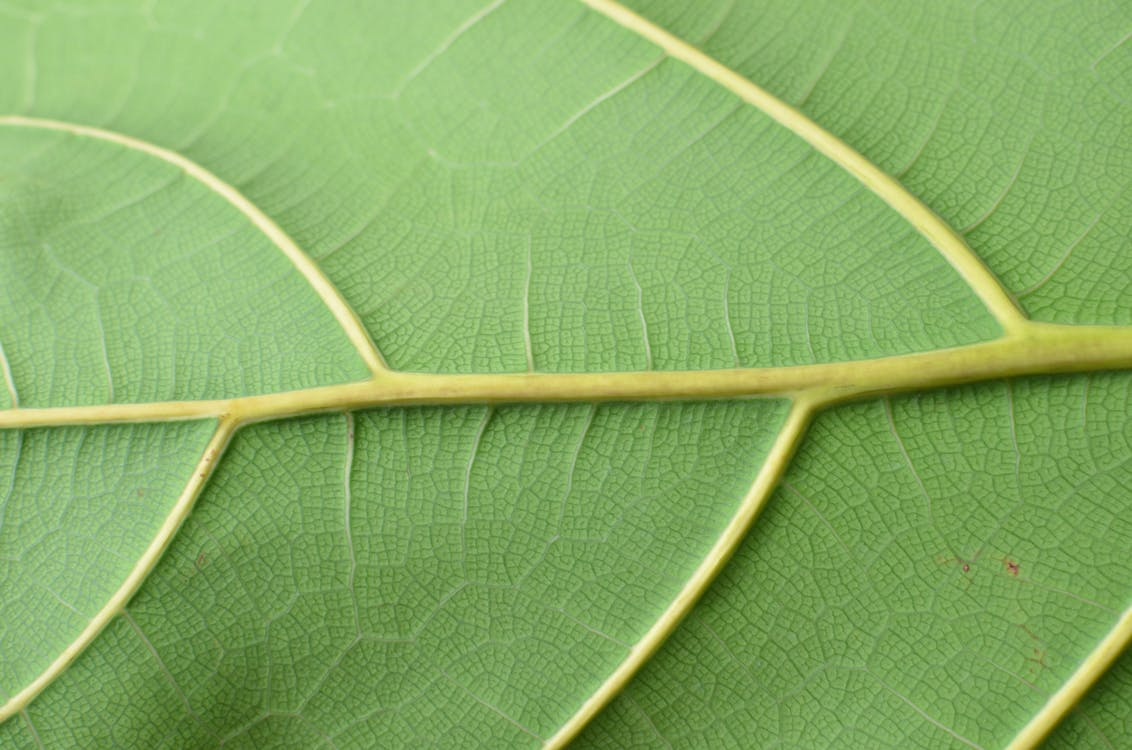 Textured surface of green leaf with veins