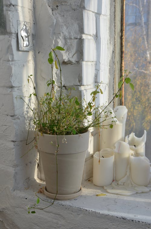 Ceramic pot with plant with green leaves on thin stems placed near candles