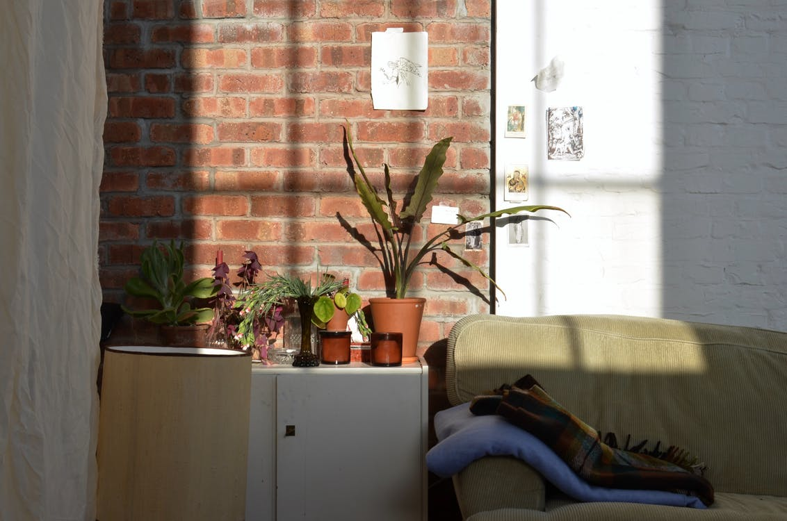 Various plants in pots placed on wooden cabinet near couch in living room of apartment