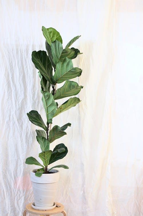 Imagine de stoc gratuită din acasă, angiosperme, botanic
