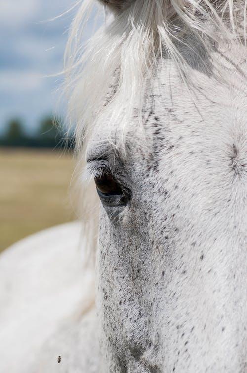 Close Up Photo of an Animal Eye