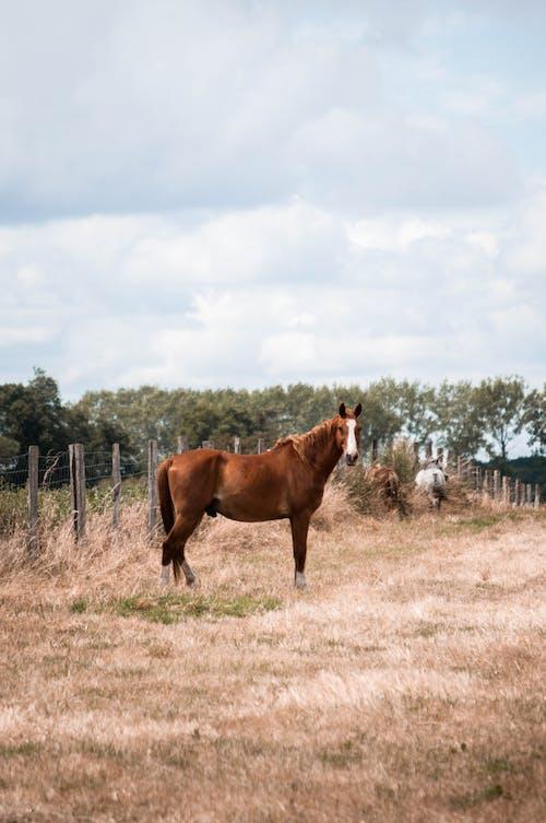 Brown Horse on a Grass Field