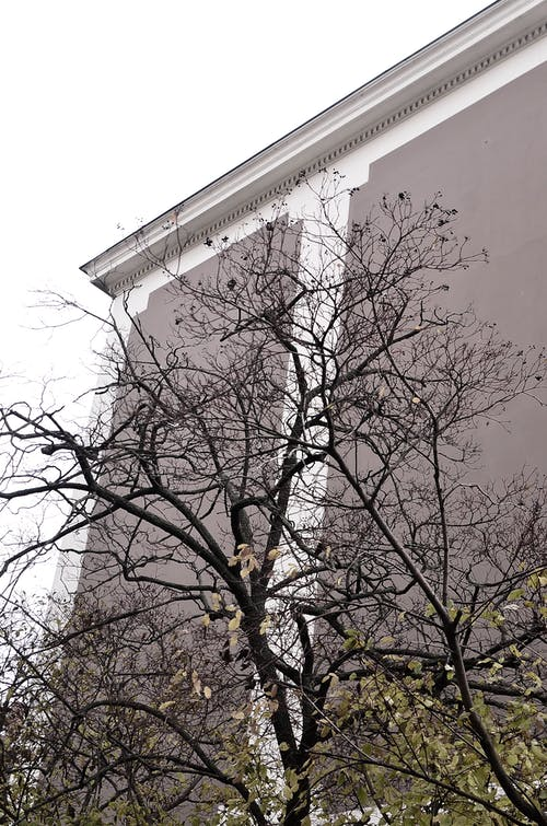 From below of tall tree with leafless branches growing near concrete building in town