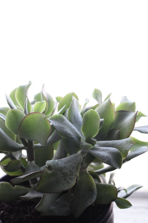 Potted succulent plant on windowsill at home