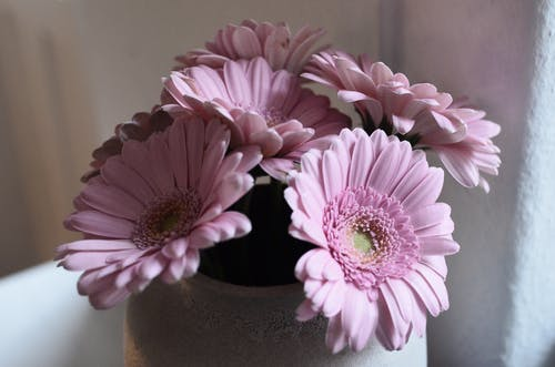Bouquet of flowers with pink petals placed in ceramic vase on stand near rough wall in room on blurred background