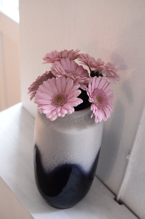 From above of pink gerberas in white and blue ceramic vase placed on white shelf near wall in light room