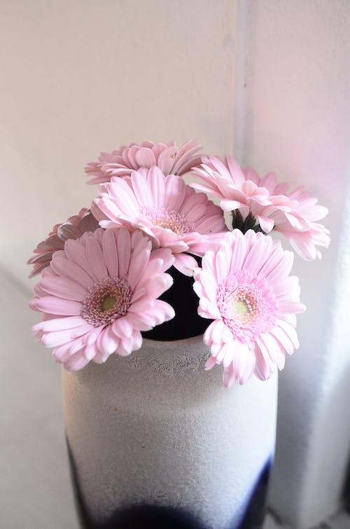 White vase with fresh gerberas