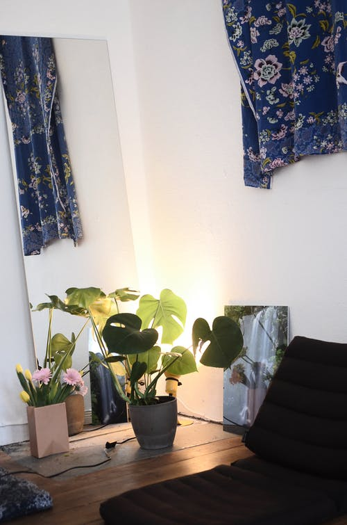 Plant with green lush leaves growing in pot placed on floor near colorful flowers in room with mirrors and mattress