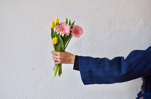 Unrecognizable person wearing blue jacket demonstrating bouquet of yellow tulips and pink gerberas in hand on white background during holiday
