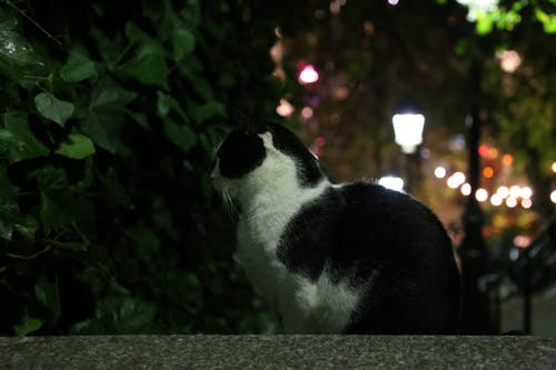 Free stock photo of black, cat, profile