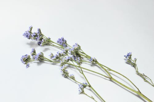 From above of lavender flowers on green long stems with small purple petals placed on white background in light studio