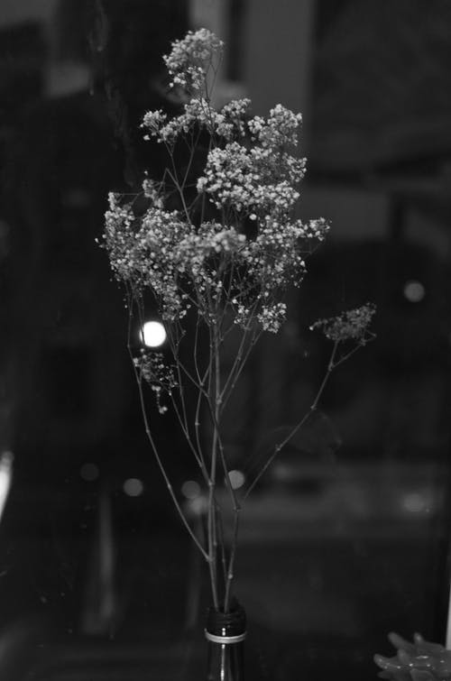 Black and white of delicate branches with flowers of gypsophila in blossom placed in bottle