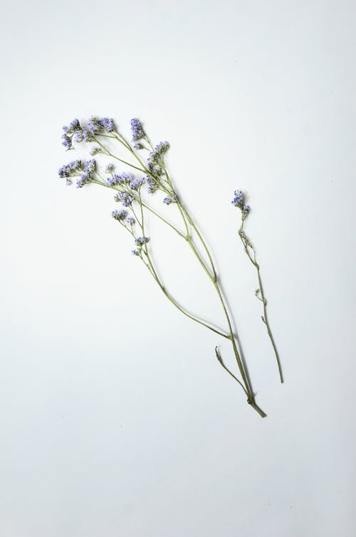 Fragile blue blooming flowers on thin green stems